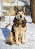 Σκυλί στο χιόνι Στοκ Εικόνες