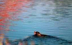 Σκυλί στο elliðarà ¡ Στοκ φωτογραφίες με δικαίωμα ελεύθερης χρήσης