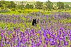 Σκυλί στο flowerfield Στοκ φωτογραφία με δικαίωμα ελεύθερης χρήσης
