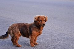 σκυλί συμπαθητικό στοκ φωτογραφία με δικαίωμα ελεύθερης χρήσης