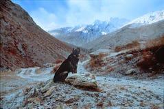 Σκυλί συνεδρίασης στο υπόβαθρο βουνών Στοκ Φωτογραφία