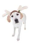 Σκυλί ταράνδων Χριστουγέννων Στοκ εικόνα με δικαίωμα ελεύθερης χρήσης