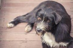 Σκυλί της Ασίας Στοκ φωτογραφίες με δικαίωμα ελεύθερης χρήσης