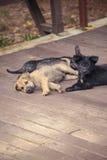 Σκυλί της Ασίας Στοκ φωτογραφία με δικαίωμα ελεύθερης χρήσης
