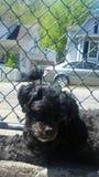 Σκυλί της Daisy Στοκ φωτογραφία με δικαίωμα ελεύθερης χρήσης