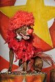 Σκυλί τσίρκων Στοκ φωτογραφία με δικαίωμα ελεύθερης χρήσης