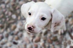 σκυλί υπαίθρια Στοκ Φωτογραφία