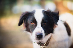 σκυλί λυπημένο Στοκ Εικόνες