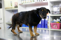 σκυλί λυπημένο Στοκ φωτογραφία με δικαίωμα ελεύθερης χρήσης