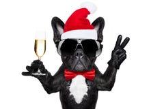 Σκυλί Χριστουγέννων Άγιου Βασίλη Στοκ Εικόνες