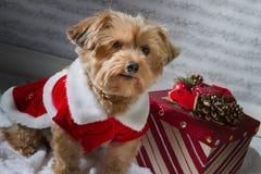 Σκυλί Χριστουγέννων με ένα παρόν Στοκ εικόνα με δικαίωμα ελεύθερης χρήσης