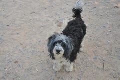 Σκυλί χωρίς το σπίτι στοκ φωτογραφία με δικαίωμα ελεύθερης χρήσης
