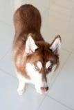 Σκυλί όρθιο Στοκ εικόνα με δικαίωμα ελεύθερης χρήσης