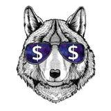 Σκυλί λύκων που φορά τα γυαλιά με την απεικόνιση σημαδιών δολαρίων με το άγριο ζώο για την μπλούζα, σκίτσο δερματοστιξιών, μπάλωμ Στοκ φωτογραφία με δικαίωμα ελεύθερης χρήσης