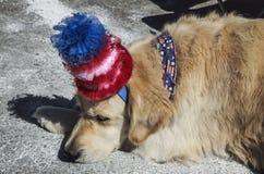Σκυλί ύπνου με το κόκκινο άσπρο και μπλε καπέλο, στις 4 Ιουλίου, παρέλαση ημέρας της ανεξαρτησίας, Telluride, Κολοράντο, ΗΠΑ Στοκ Φωτογραφία