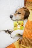 Σκυλί ύπνου με το παρόν δώρο κιβωτίων Στοκ εικόνες με δικαίωμα ελεύθερης χρήσης
