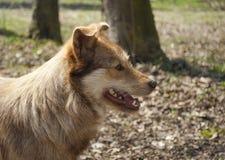 Σκυλί. Στοκ εικόνα με δικαίωμα ελεύθερης χρήσης