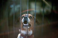 Σκυλί-3 Στοκ εικόνα με δικαίωμα ελεύθερης χρήσης