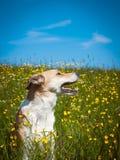 Σκυλί (199) Στοκ εικόνες με δικαίωμα ελεύθερης χρήσης