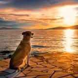Σκυλί Στοκ εικόνες με δικαίωμα ελεύθερης χρήσης
