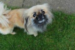 Σκυλί Στοκ εικόνα με δικαίωμα ελεύθερης χρήσης
