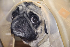 Σκυλί Στοκ φωτογραφίες με δικαίωμα ελεύθερης χρήσης