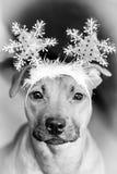 Σκυλί Chrismtas Στοκ φωτογραφίες με δικαίωμα ελεύθερης χρήσης