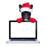 Σκυλί Christams στοκ φωτογραφία με δικαίωμα ελεύθερης χρήσης