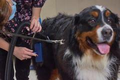 Σκυλί groomer με την εργασία εργαλείων Στοκ Εικόνες