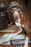 Σκυλί ibicenco Podenco με τα γυαλιά και το καπέλο Στοκ φωτογραφία με δικαίωμα ελεύθερης χρήσης