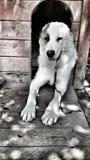 Σκυλί MAX Στοκ εικόνα με δικαίωμα ελεύθερης χρήσης