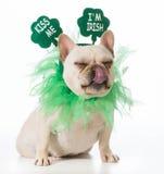 σκυλί patricks ST ημέρας Στοκ φωτογραφίες με δικαίωμα ελεύθερης χρήσης