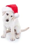 Σκυλί Santa Χριστουγέννων Στοκ Φωτογραφίες
