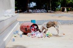 Σκυλί Scabies Στοκ Εικόνες