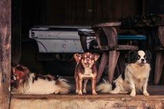 σκυλιά αστεία Στοκ Φωτογραφίες