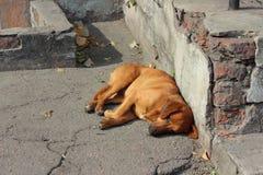 Σκυλιά διακοπών Στοκ φωτογραφία με δικαίωμα ελεύθερης χρήσης
