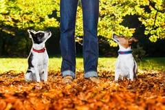 Σκυλιά και ιδιοκτήτης Στοκ φωτογραφία με δικαίωμα ελεύθερης χρήσης
