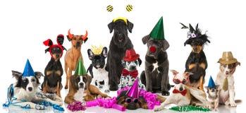 Σκυλιά καρναβάλι Στοκ Φωτογραφίες