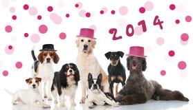 Σκυλιά κόμματος Στοκ εικόνες με δικαίωμα ελεύθερης χρήσης