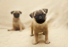 Σκυλιά μαλαγμένου πηλού Στοκ φωτογραφία με δικαίωμα ελεύθερης χρήσης