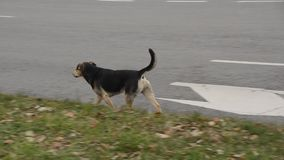 Σκυλιά οδών φιλμ μικρού μήκους