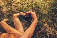 Σκυλιά πίστης Στοκ Εικόνα