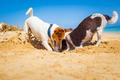 Σκυλιά που σκάβουν μια τρύπα Στοκ εικόνες με δικαίωμα ελεύθερης χρήσης