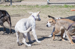 Σκυλιά που συναντιούνται στο πάρκο σκυλιών Στοκ φωτογραφία με δικαίωμα ελεύθερης χρήσης