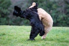 Σκυλιά που τρέχουν και που παίζουν Στοκ φωτογραφία με δικαίωμα ελεύθερης χρήσης