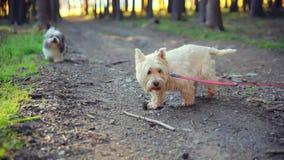 Σκυλιά σε ένα λουρί στα ξύλα