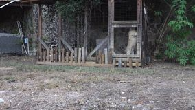 Σκυλιά σε μια μάνδρα στους τροπικούς κύκλους φιλμ μικρού μήκους