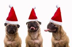 Σκυλιά στα καπέλα Santa Στοκ Εικόνα