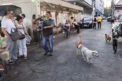 Σκυλιά στην οδό της Μπανγκόκ Στοκ φωτογραφία με δικαίωμα ελεύθερης χρήσης