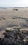 Σκυλιά στην παραλία Στοκ Φωτογραφία